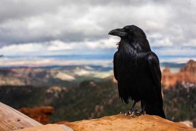 crow-828944_1920 (1)